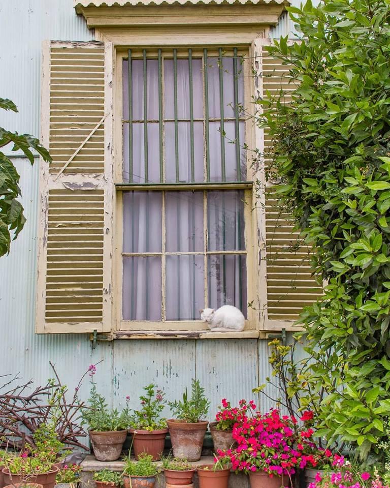 janela de uma casa com um gato dormindo - saudade de casa