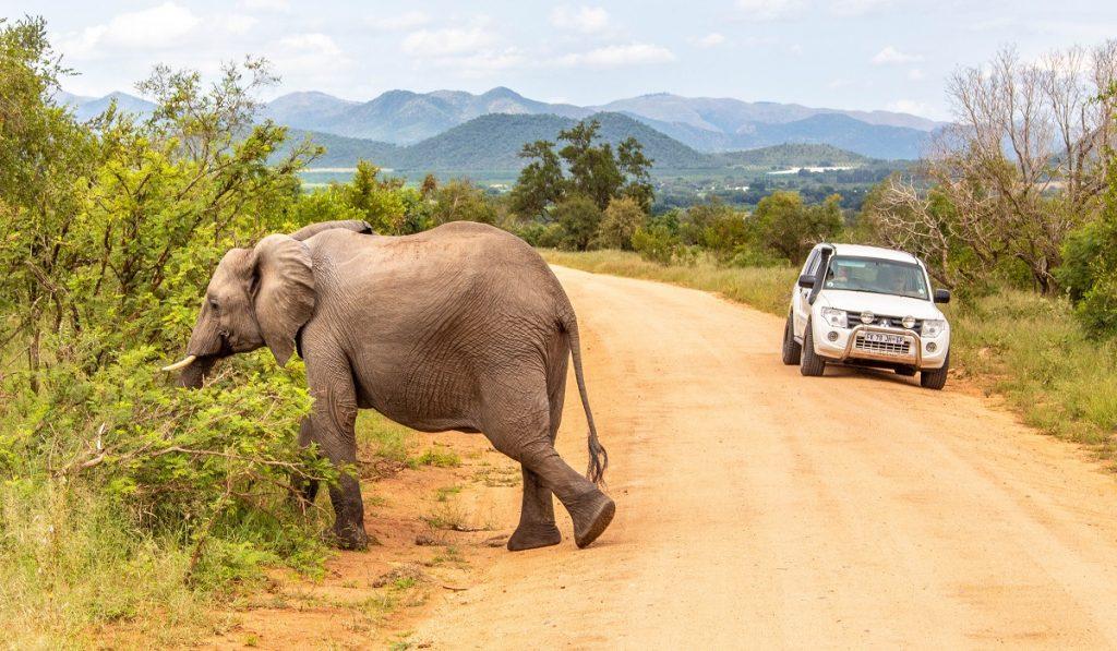 elefante atravessando rua de terra e carro ao fundo - perigoso safari